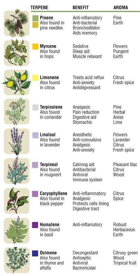 Different Types of Terpenes